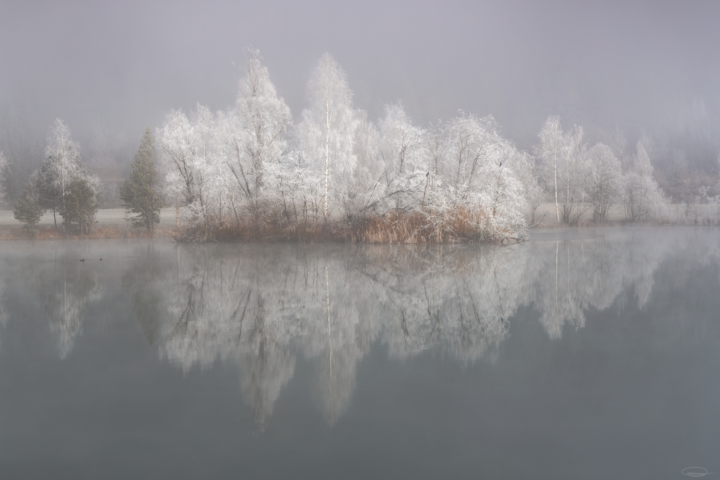 Fog & Frost - Linsendorfer See