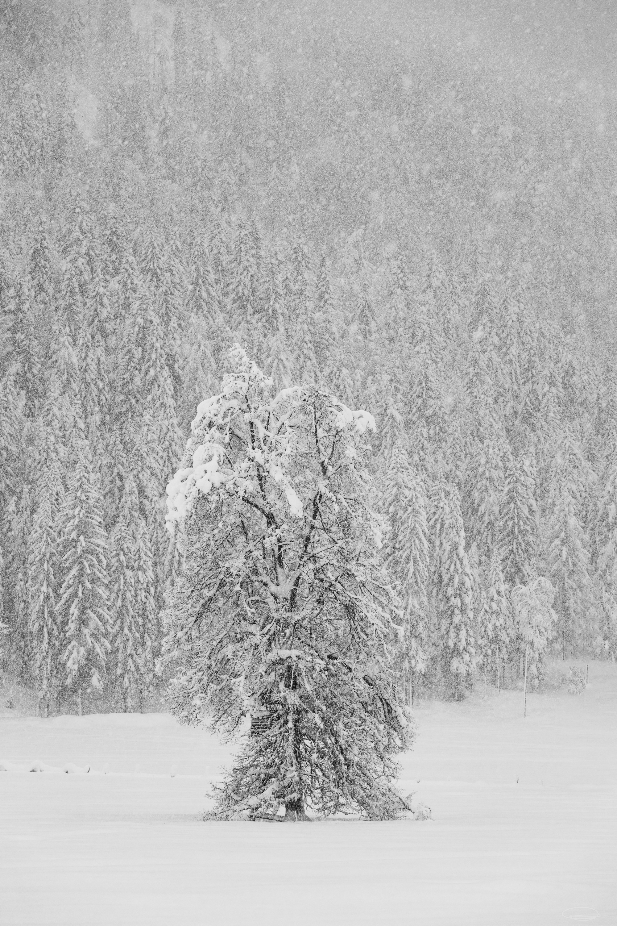 Snowy tree at the Farchtensee